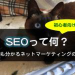 初心者向け!SEOって何?ネコでも分かるネットマーケティングの基礎