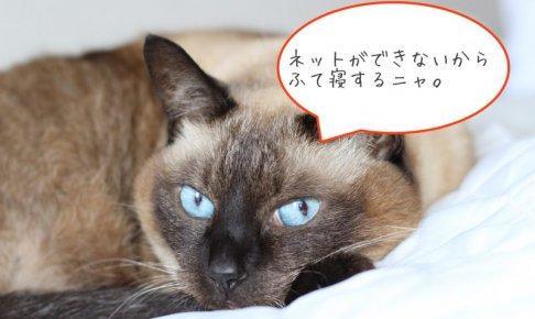 PDP認証が失敗しましたと出てふて寝している猫