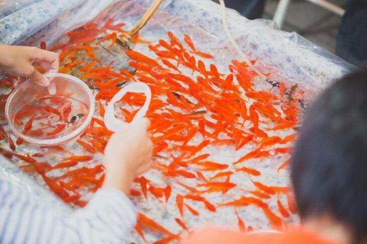 5W1Hではなく7W3H:どのくらいの数の金魚がいるのだろうか?