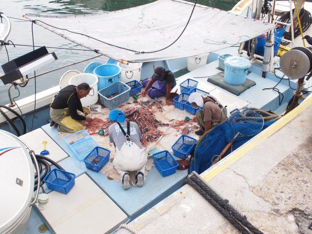 漁から港に戻り船の上で選別作業