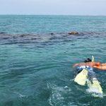 泳いでおくべきだった石垣島の白保の海