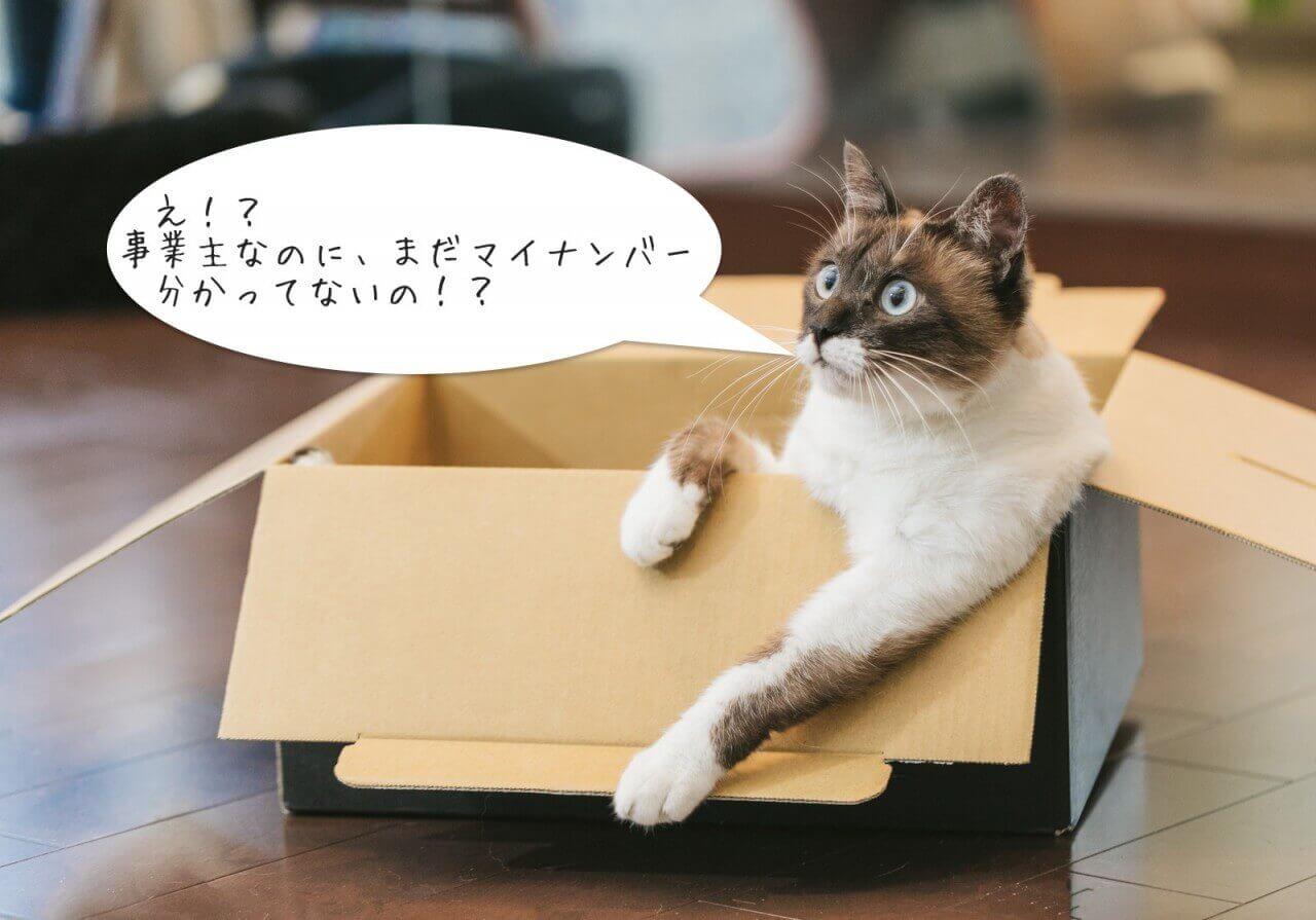 マイナンバーを指摘する猫